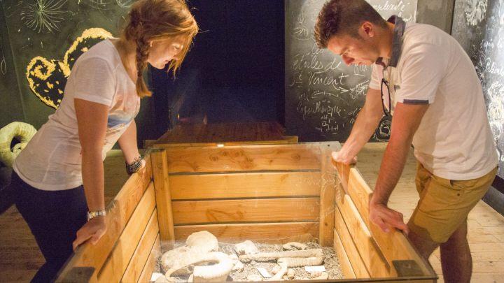 La collection de fossiles au Musée Promenade de Digne-les-Bains