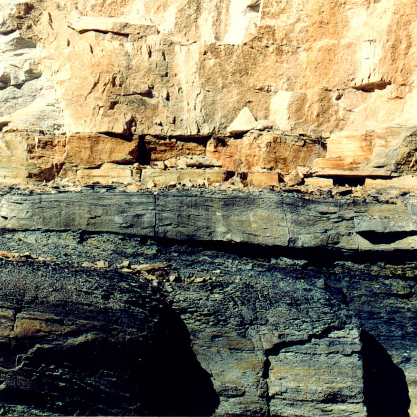 1.Le Carbonifère, un clin d'œil à l'Ère primaire 1