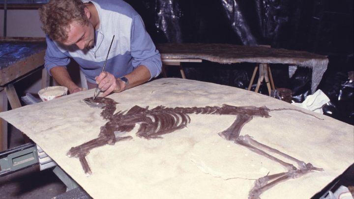 MOULAGE ichtyosaure REALISATION ATEMUS