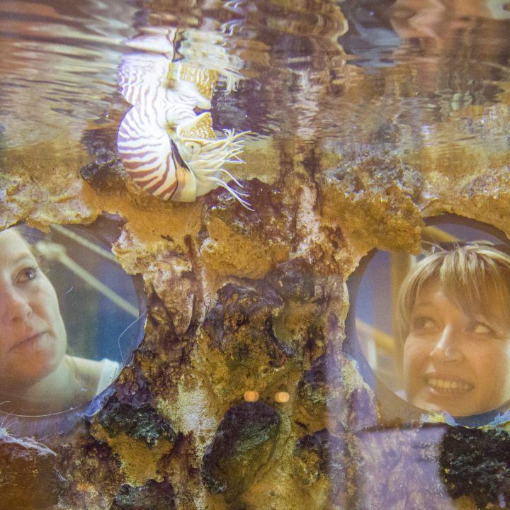 Les aquariums tropicaux au Musée Promenade de Digne-les-Bains