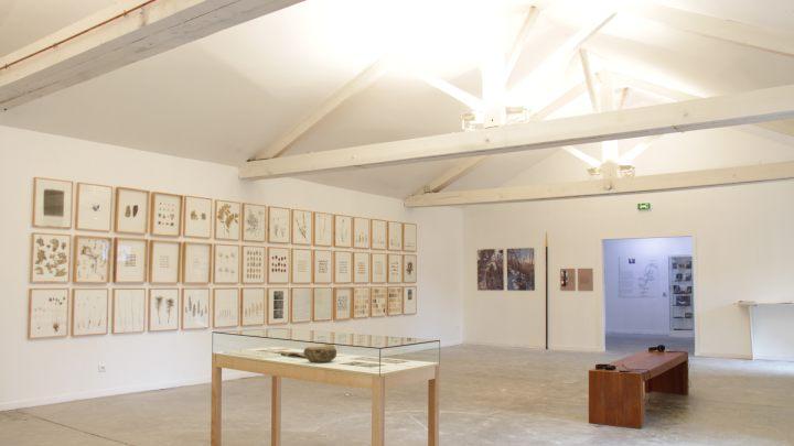 Exposition á mes pieds, herman de vries, CAIRN centre d'art, 2015
